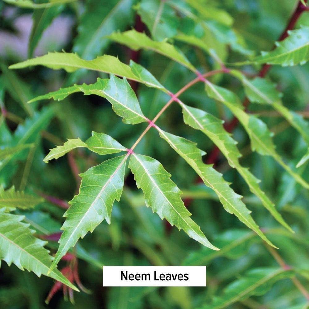 Banyan Botanicals Neem Powder - USDA Organic - 1/2 Pound, Azadirachta Indica - Ayurvedic Herb for Skin & Blood*: Health & Personal Care