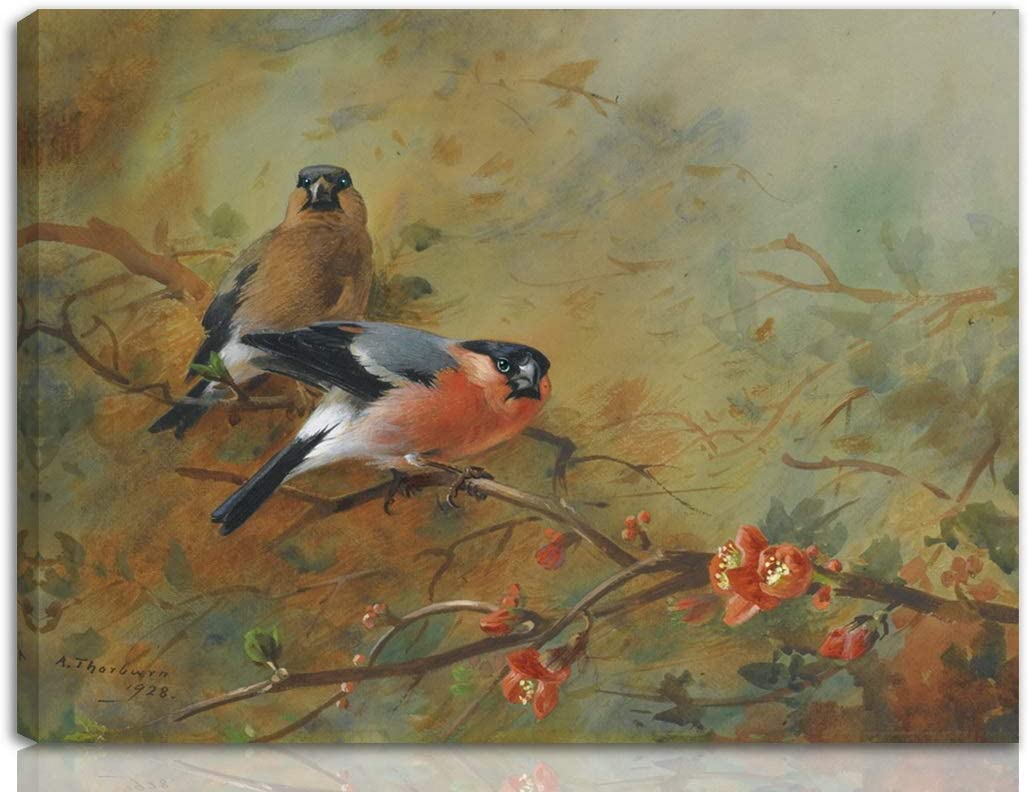 Berkin Arts Archibald Thorburn Stretched Giclee Print On Canvas-Famous Paintings Fine Art Poster-Reproduction Wall Decor Ready to Hang(Bullfinches and Pyrus Japonica)#NK