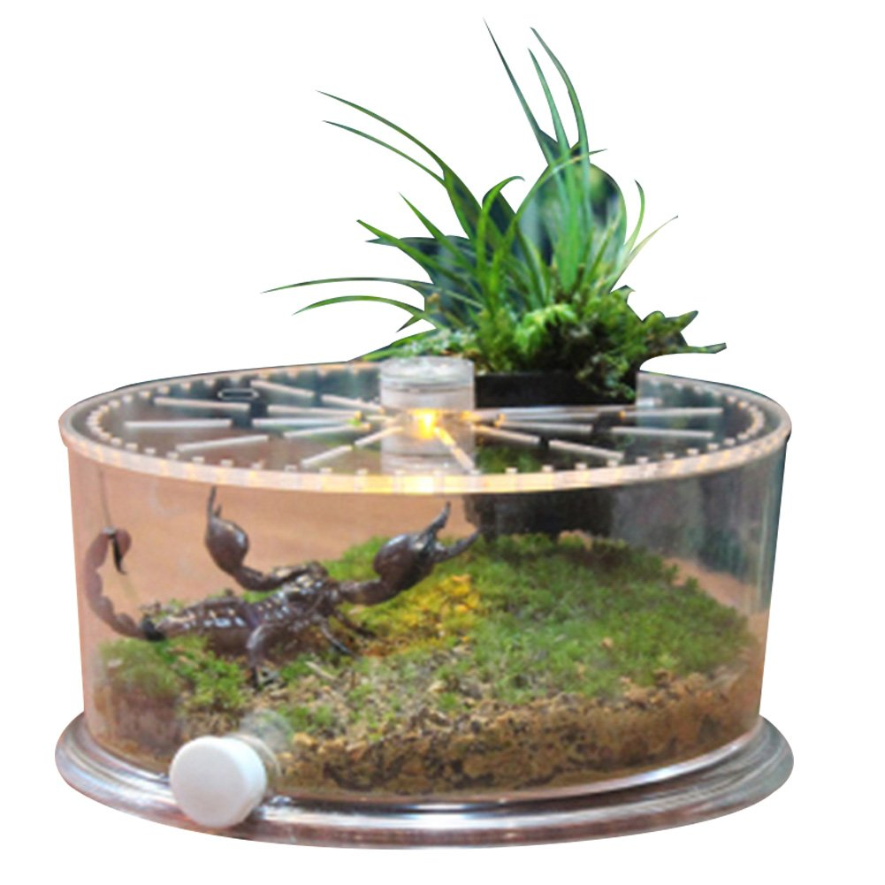 Office table fish tank, suitable for turtle, fish, reptile perfect ecological landscape box (reptile small)