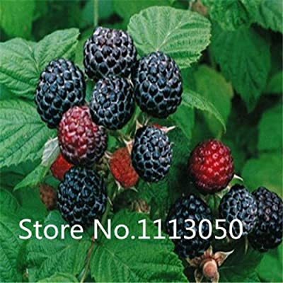 Sale! Free Shipping 100pcs 10 kinds Bonsai raspberry Seeds 100% Genuine Organic Blooming Fruit Seeds Garden Plant