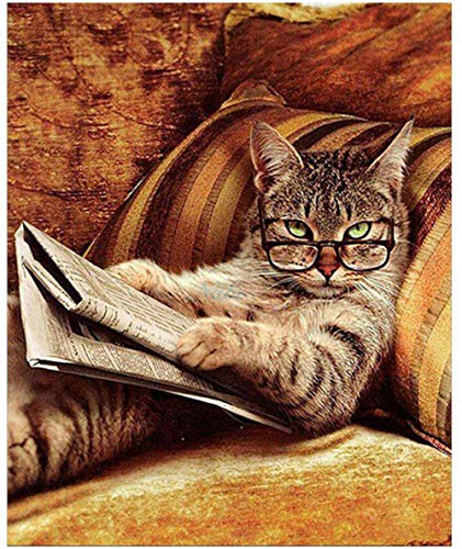 (DIY Painting By Numbers Adult Hand Painted Oil Paint Kits Paint-Cat wearing glasses reading a book 16