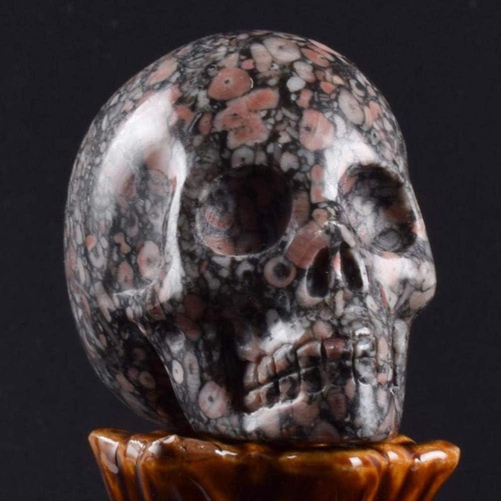 THREE 2 Pulgadas Hecho a Mano de Piedra Natural cráneo estatuilla Tallada en Cristal Estatua Realista Feng Shui curación hogar Ornamento Arte Coleccionable, Crinoid Jasper