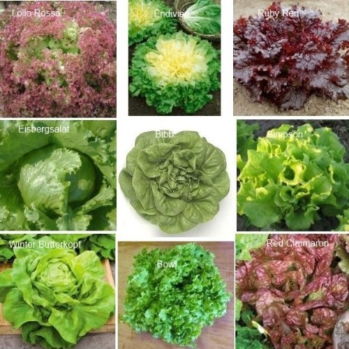 9 Arten - Schöne Salat Set - 2250 Samen