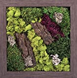 Carpentree 18''x18'' Walk in the Woods-Biophilic Framed Art