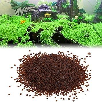 kofun Agua Plantas Semillas Acuario Agua Ornamentales Acuario Hierba Primer plano Decor: Amazon.es: Hogar