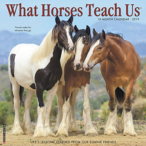What Horses Teach Us 2019 Calendar