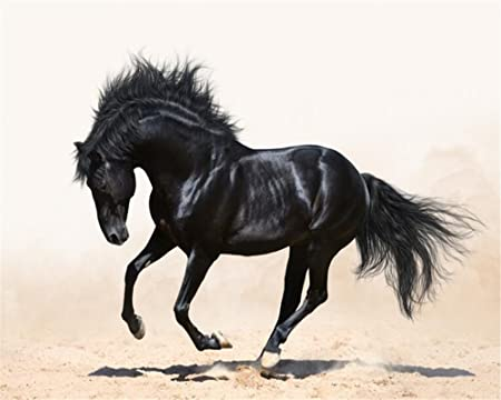 Mbwlkj 3D Wallpaper Black Horse Photo Tv Sofa Background Decorative 400Cmx280Cm