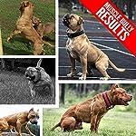 Vita Bully Vitamins for Bully Breeds: Pit Bulls, American Bullies, Exotic Bullies, Bulldogs, Pocket Bullies, Made in The USA. (60 Vitamins) 8