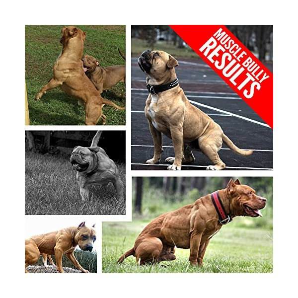 Vita Bully Vitamins for Bully Breeds: Pit Bulls, American Bullies, Exotic Bullies, Bulldogs, Pocket Bullies, Made in The USA. (60 Vitamins) 2