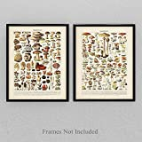 Vintage French Mushrooms - Set of Two - 11x14 Unframed Art Print - Perfect Vintage Home Kitchen Decor/Farm Decor