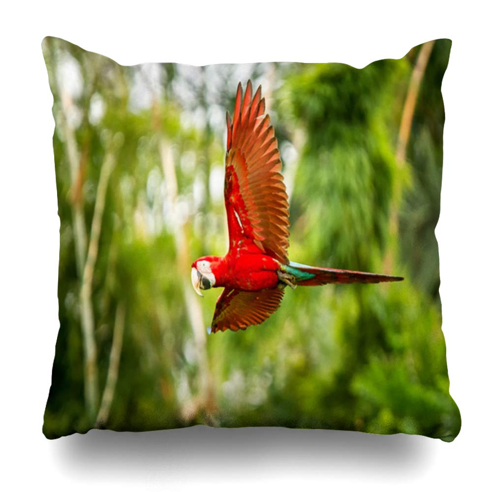 Ahawoso Throw Pillow Cover Pillowcase Square 20x20 in Red Parrot Flight Fly Colorful Macaw Flying Green Animals Wing Wildlife Amazonian Exotic Nature Decorative Cushion Case Home Decor Pillowslip