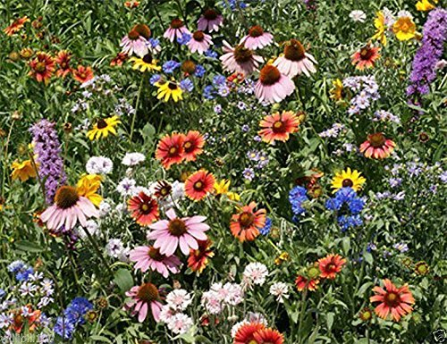 Northeast Wildflower Seed Mix ( 1 oz Seed) Covers approximately 500 square feet