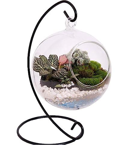 Amazon Com 10l0l Charming Clear Hanging Glass Ball Vase Air Plant