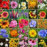 Non GMO Bulk Midwest Wildflower Seed Mix 25 Species of Wildflower Seeds (10 Lbs)