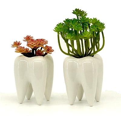 Mecai Set of 2 Mini White Ceramic Tooth Planter Pots for Succulents Planter Plants,Office Decor for Women Men Desk Cute,Dentist Gift Ideas: Garden & Outdoor