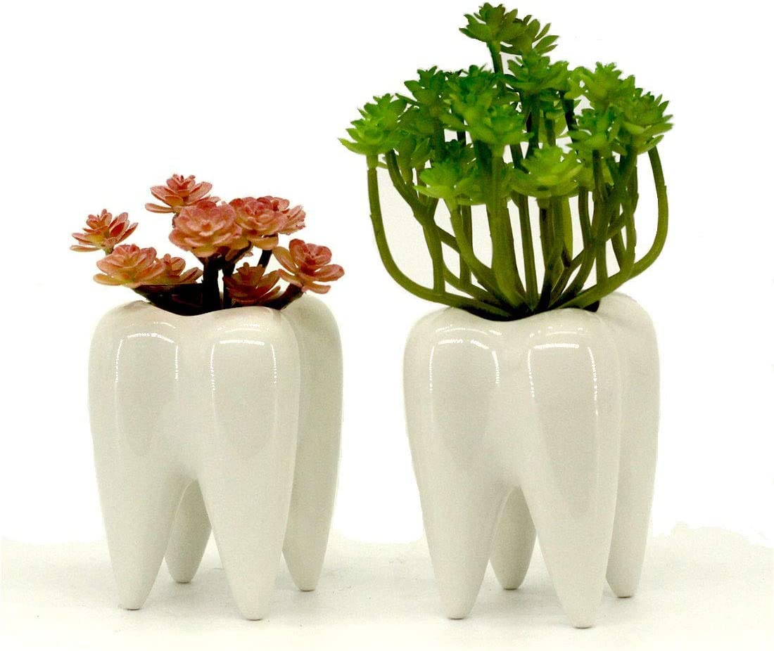 Mecai Set of 2 Tooth Planter Mini White Ceramic Pots for Succulents Plants Cute Office Home Desk Decor for Women Men Dentist Gift Ideas