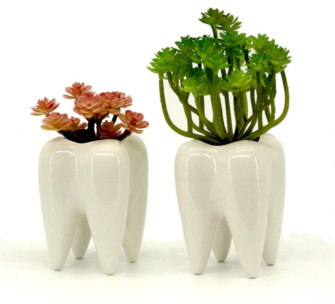 Mecai Set of 2 Mini White Ceramic Tooth Planter Pots for Succulents Planter Plants,Office Decor for Women Men Desk Cute,Dentist Gift Ideas