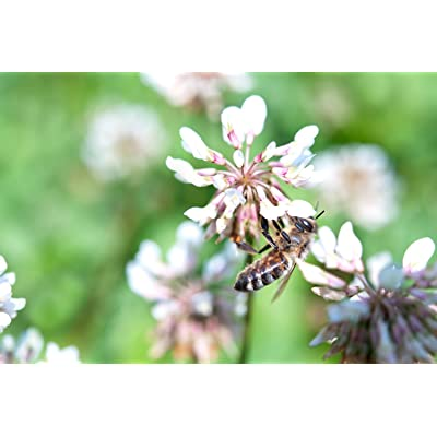 Nature's Seed Great Plains Honey Bee Pasture Blend, 1000 sq. ft. : Garden & Outdoor