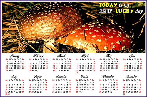 2017 Magnetic Calendar - Calendar Magnets - Today is my Lucky Day - Edition #1