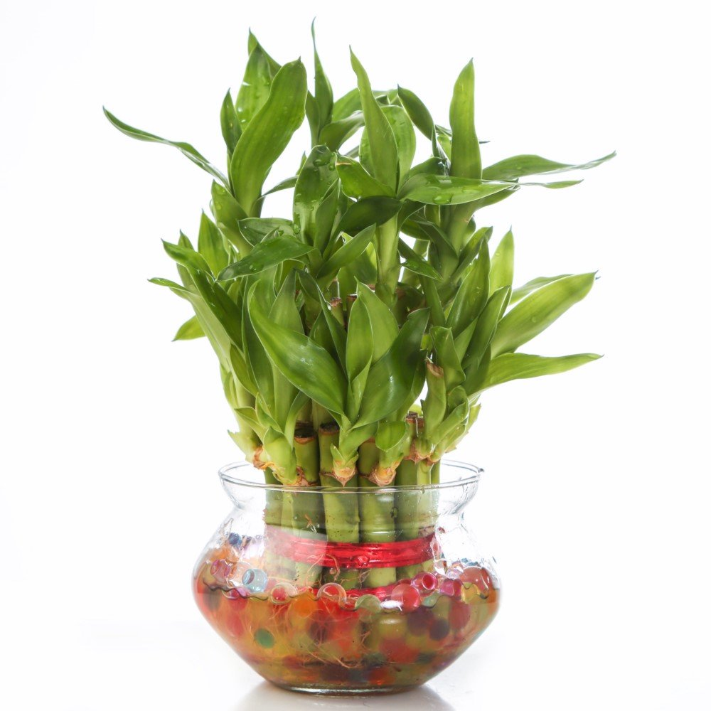 Indoor Plants: Buy Indoor Plants Online at Best Prices in India ...