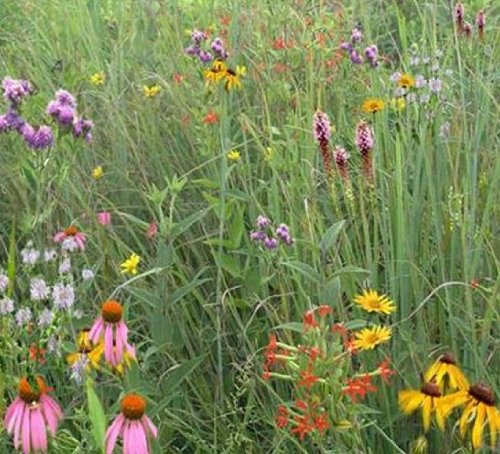 mixed-grass-meadow-mix-mix-106-500-certified-pure-live-seed-true-native-seed