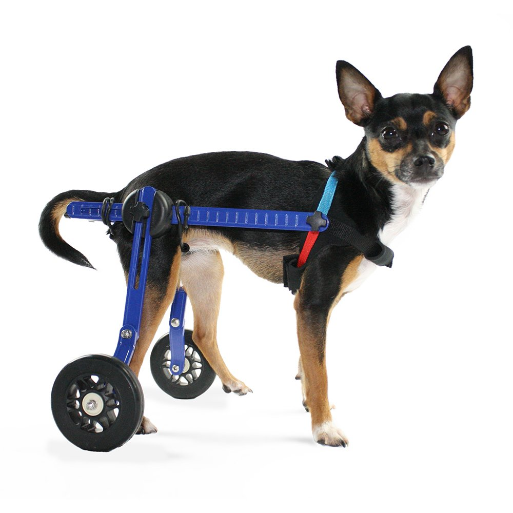 2-10 lbs, 6-8\ Dog WheelchairXS for Mini Toy Breeds 2-10 lbs-Veterinarian Approved Wheelchair for Back Legs