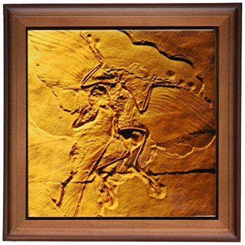 3dRose ft 16715 1 Archaeopteryx Jurasic Germany