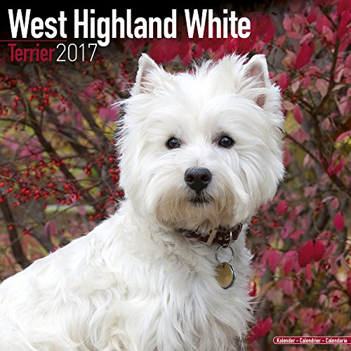 West Highland Terrier Calendar 2017 - Westie - Dog Breed Calendars - 2016 - 2017 wall calendars - 16 Month by Avonside