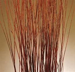 GreenFloralCrafts 4.5 to 5 ft Tall Mahogany Red Asian Willow, Bunch of 95-100 stems & Green Limonium (Vase Not Included)