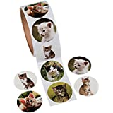 Fun Express Paper Cat Photo Roll of Stickers (100 Stickers per Roll, Shrink-Wrapped)