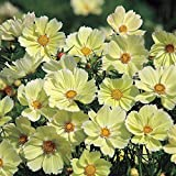 Park Seed Xanthos Cosmos Seeds