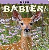 Deer Babies, photography by Donald M. Jones, 1560370831