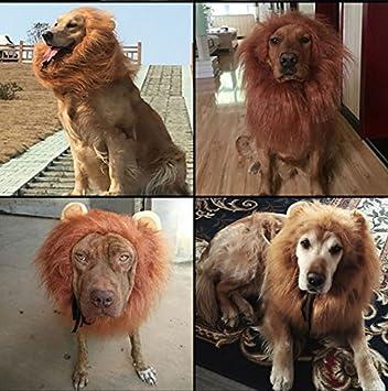 Perro León melena – Realista & Funny León melena para perros – León Mane para perro