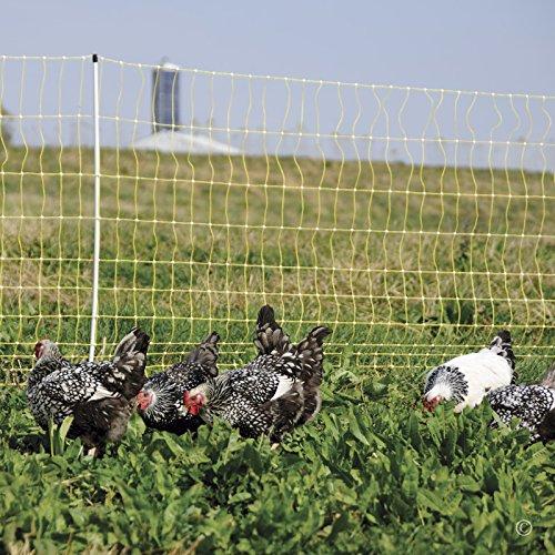 Poultry Electric Fencing (Premier 48