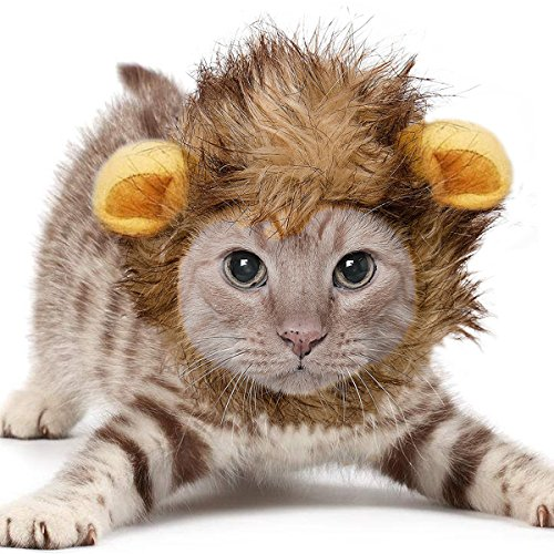 Cute Cat In Costumes (KINGMAS Lion Mane for Cat, Cute Pet Costume Lion Wig with Ears for Cat & Small Dog)