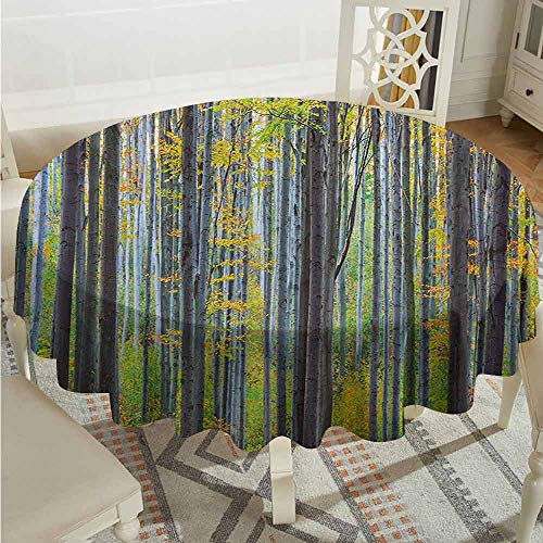 Suchashome Outdoors Round Tablecloth Fall Lush Beech Fall Tree with Tall Bodies Wilderness Rural Countryside Themed Design Grey Yellow Table Cover Diameter - Beech Inch Desk 36