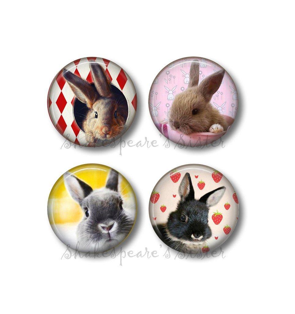 Bunny Rabbit Art - Fridge Magnets - Rabbit Decor - 4 Magnets - 1.5 Inch Magnets - Kitchen Magnets - Bunny Magnets - Funny Kitchen Magnets