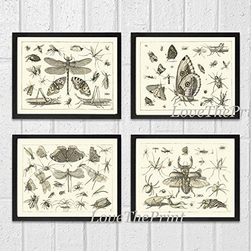 art-print-set-of-4-beautiful-antique-dragonfly-butterfly-beetle-moth-spider-spring-summer-garden-ins