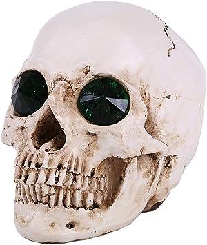 Anatomía de la mandíbula inferior