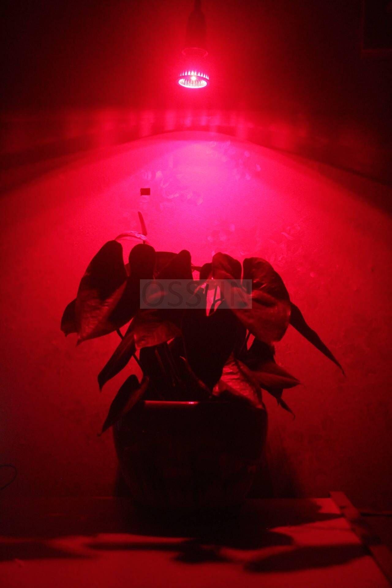 OSSUN LED Full Spectrum Plant Grow Light Bulb E26 5W Hydroponic Lamp for Indoor Flower Plants Growth Vegetable Greenhouse 85-265V,Professional (1)