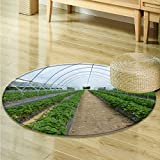 Dining Room Home Bedroom Carpet Floor Mat Strawberries planted in Greenhouse Non Slip rug-Round 59''