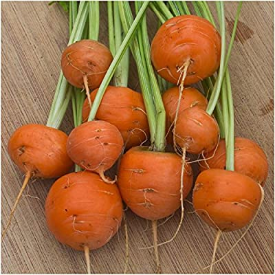 Package of 800 Seeds, Paris Market Carrot (Daucus carota) Non-GMO Seeds by Seed Needs