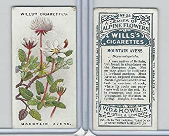 W62-62 Wills, Alpine Flowers, 1913, #28 Mountain Avens