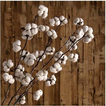 Simulation Garden Algodón Natural de Flores secas, 4 Piezas de Ramas secas secas, Ramos Secos, algodón de Pampa seco, arreglos Florales de Boda, decoración del hogar: Amazon.es: Hogar