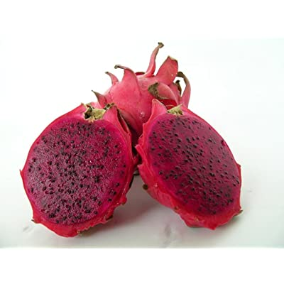 Red Dragon Fruit Live Plant Easy Growing Juicy Sweet: Toys & Games