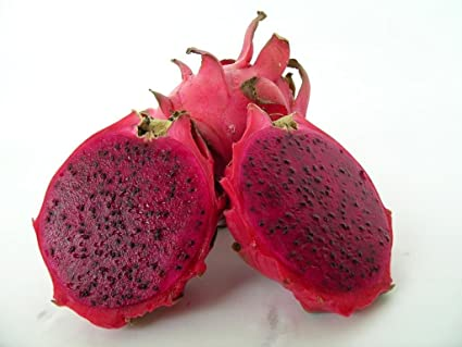 Amazon Com Red Dragon Fruit Live Plant Easy Growing Juicy Sweet