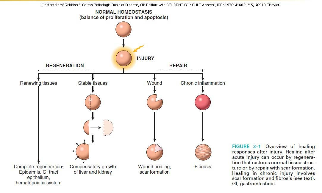 robbins anatomia patologica ita pdf