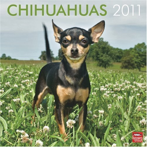 - Chihuahuas 2011 Square 12X12 Wall Calendar by BrownTrout Publishers Inc (2010-08-01)