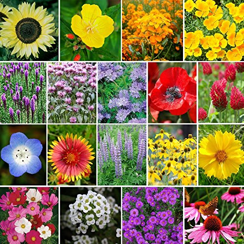 The Bees Knees - Pollinator Wildflower Seed Mix - 1 Pound, Mixed by Eden Brothers
