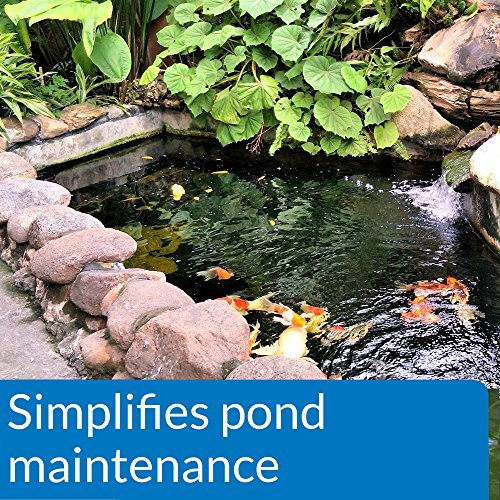 The 8 best pond water treatments